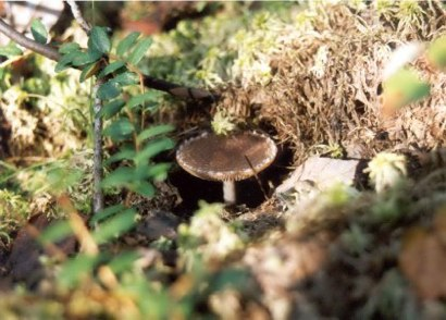 bog-fungi