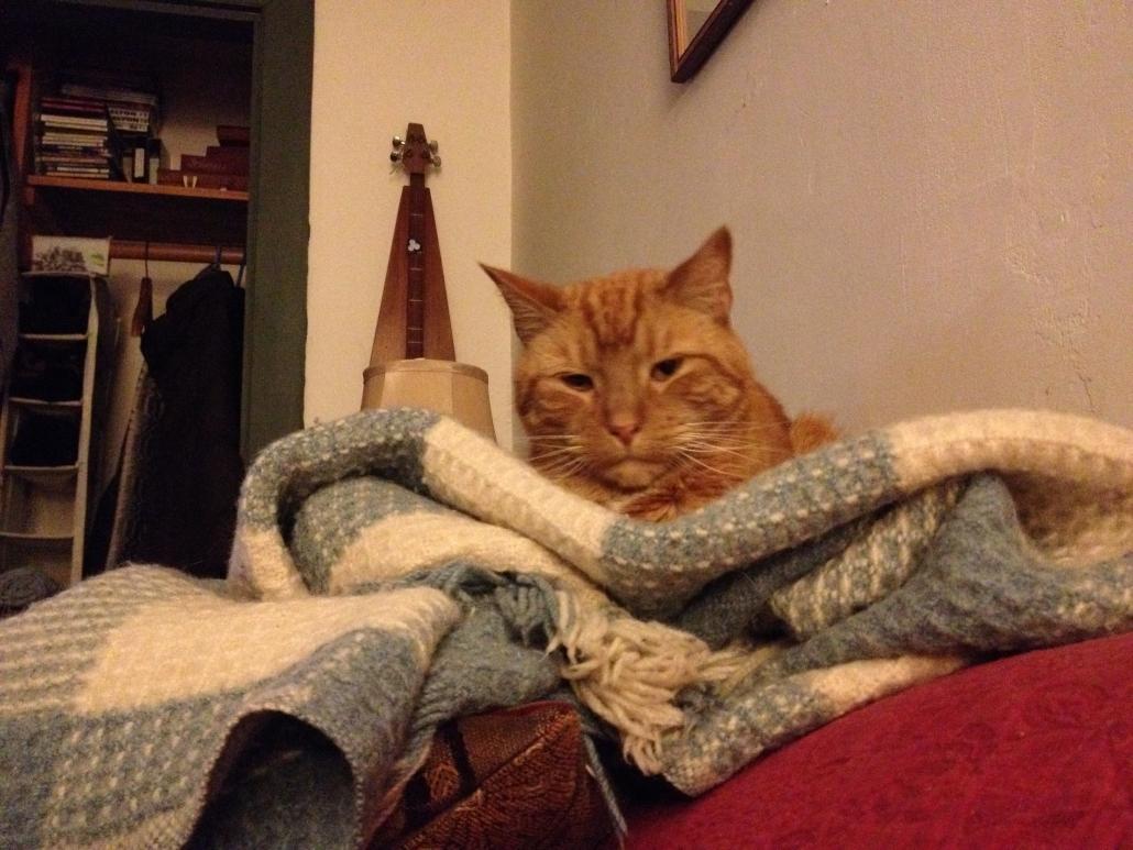 Alvin, a handsome clickbait feline
